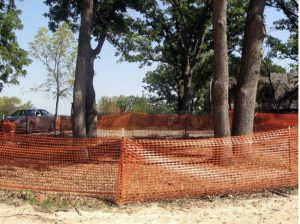 Tree Care in Construction Zones