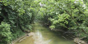 Streambank Restoration & Riparian Zones