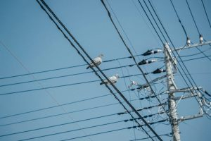 Electric Utility Lines